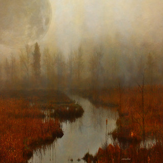 ... moon in the marsh ...