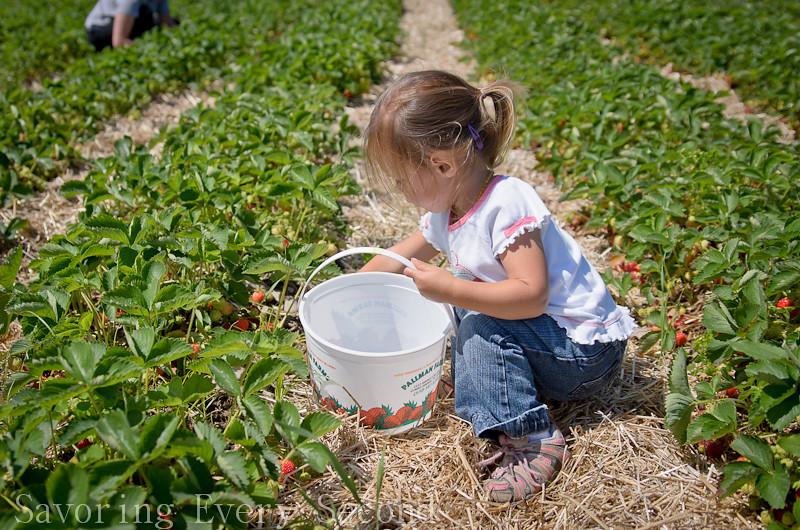 Strawberry Picking 1-013.jpg