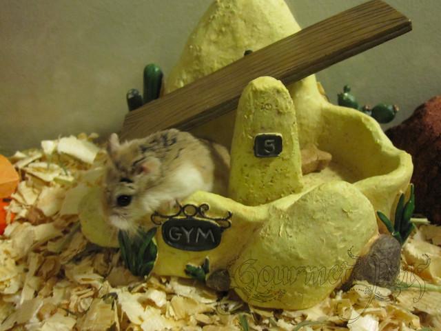 Hamster Gym