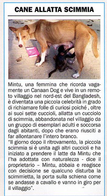 Basenjicorriere2005ot