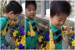 朝散歩でお花の観察 (2012/5/27)