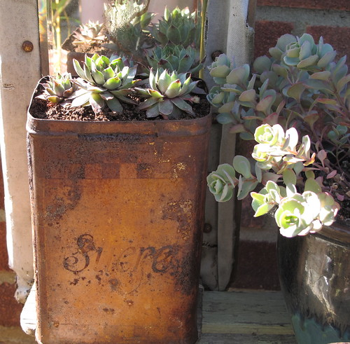 succulents & rust