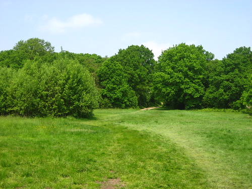 Trees and grass in Epping Forest