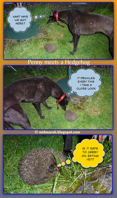 Penny Meets a Hedgehog