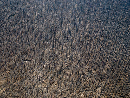 [フリー画像素材] 社会・環境, 災害, 森林, 火災・火事, 風景 - アメリカ合衆国 ID:201206092000