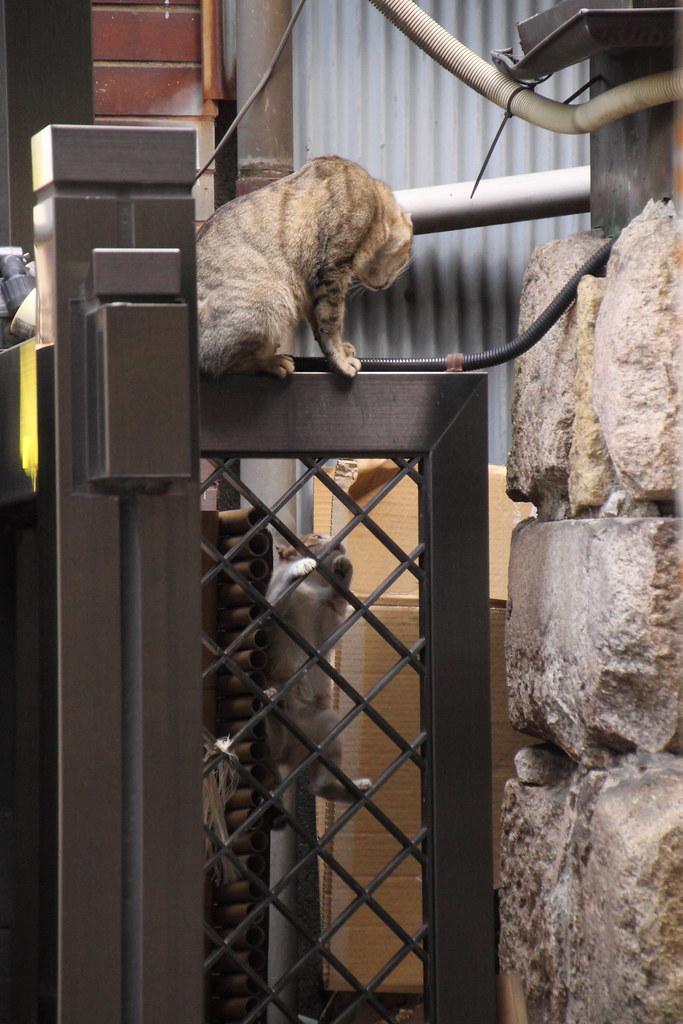 母猫の後を追う子猫 2