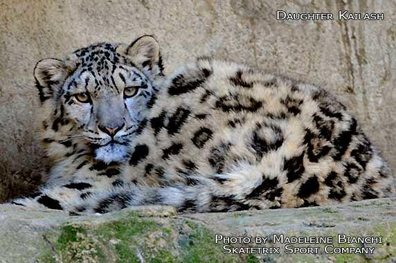 Snow Leopard Girl KAILASH