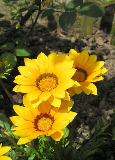 Unbekannte gartenpflanzen gel st pflanzenbestimmung - Gartenpflanzen bestimmen ...
