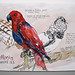 parrot by Annabelle Nielsen