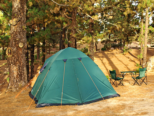 Setting up Camp in the pines