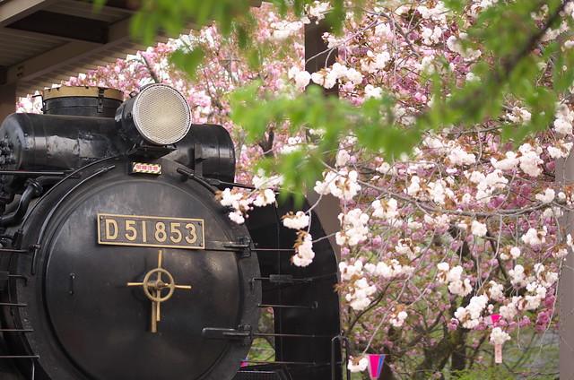 Tokyo Train Story 飛鳥山公園のSL 2014年4月13日