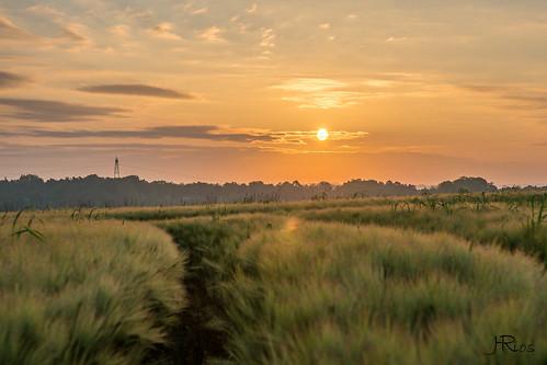 Sunrise-06684
