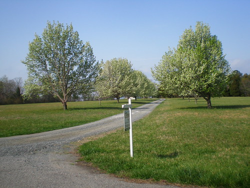 The meadow - driveway of pears