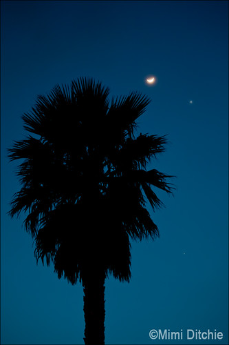 The Moon, Venus, and Jupiter