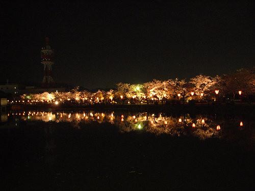 夜桜2012@大中公園(大和高田市)-02