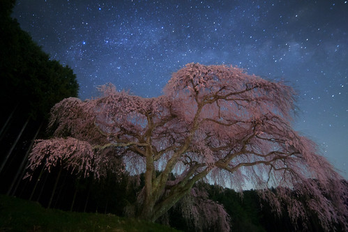 flowers blue light sky flower tree nature beautiful japan night canon stars landscape iso3200 star fisheye galaxy astrophotography cherryblossom 日本 wallpapers 花 lonelytree oneshot milkyway 夜 startrail earthandsky 14mm 星 samyang 銀河