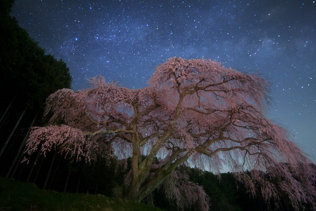 Old Cherry Blossom Galaxy