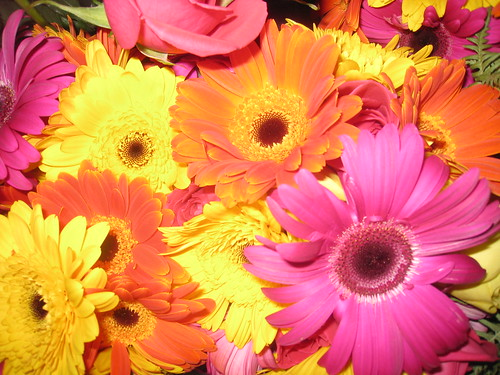Gerber Daisy Wedding Flowers