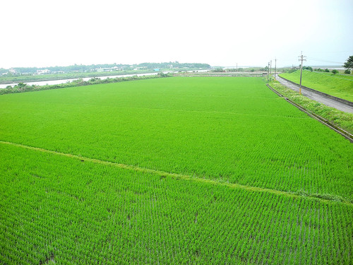 River Rice Paddy