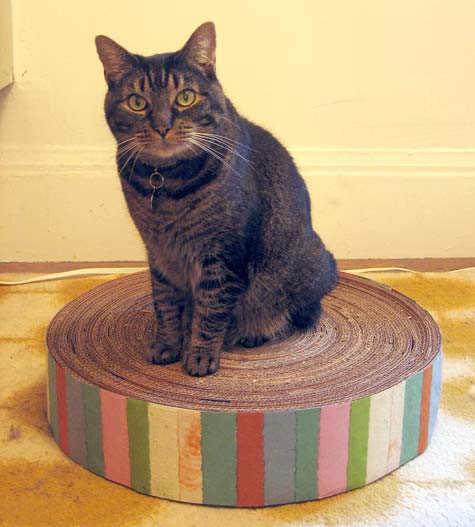 cats&cardboard_003