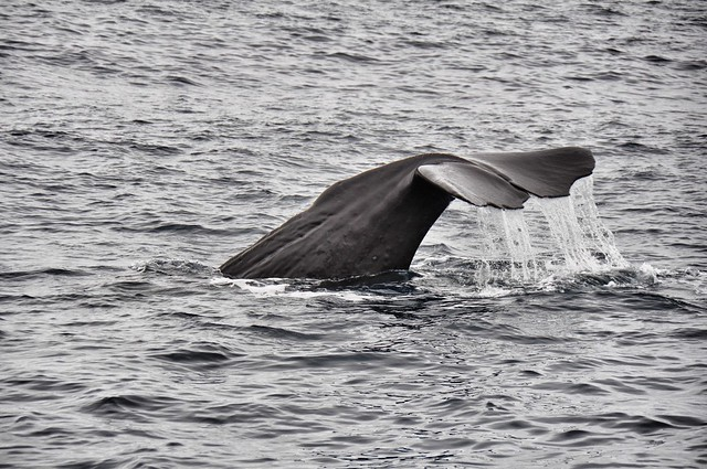 Whale Watch @ Kaikoura
