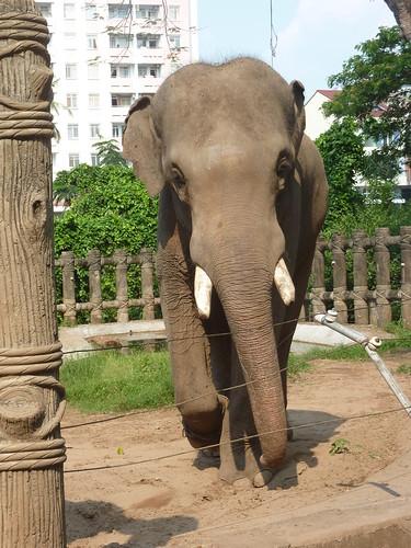 V 12-Ho Chi Minh-Jardin zoologique (3)