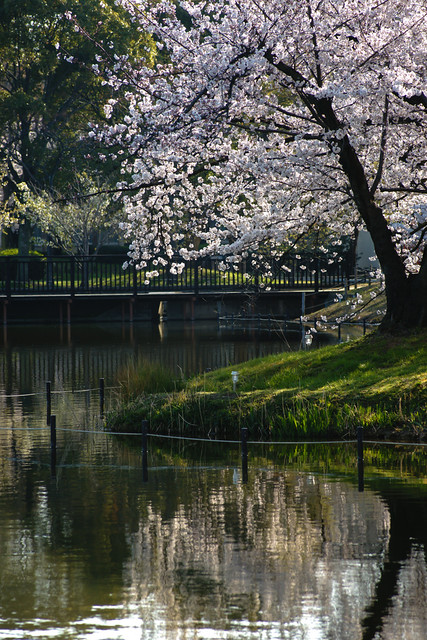 Sakura, 2012