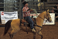 animal sports, rodeo, western riding, team penning, event, equestrian sport, rein, sports, western pleasure, charreada, reining, horse harness,