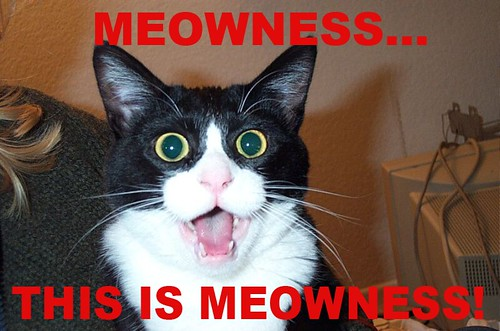 MEME CAT: THIS IS MEOWNESS by Colonel Flick