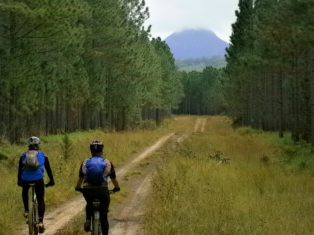 Forestry Trail