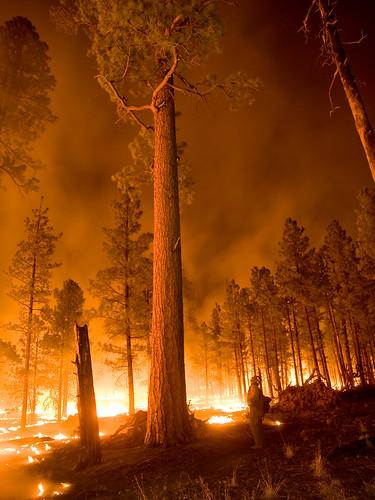 無料写真素材, 社会・環境, 災害, 森林, 火災・火事, 風景  アメリカ合衆国