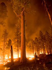 [Free Images] Society / Environment, Disaster, Forest, Conflagration / Fire, Landscape - United States of America ID:201206130400