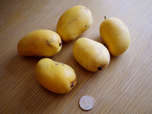 05-11 mini mangos