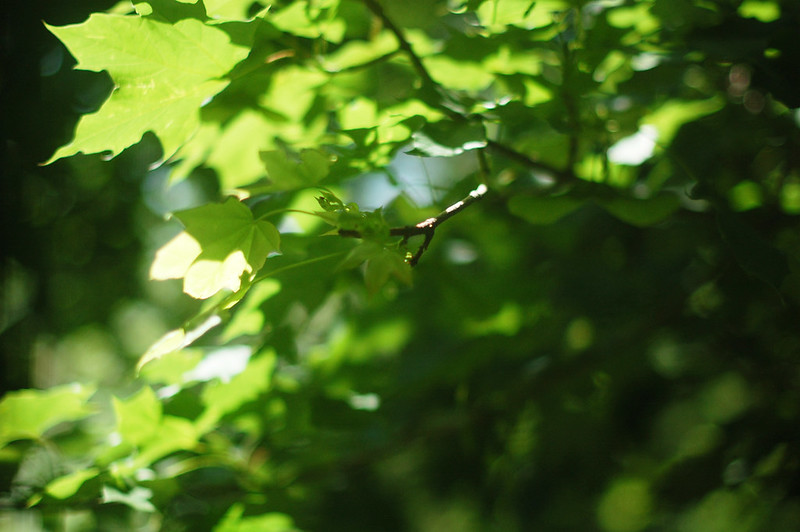 green leaves_1