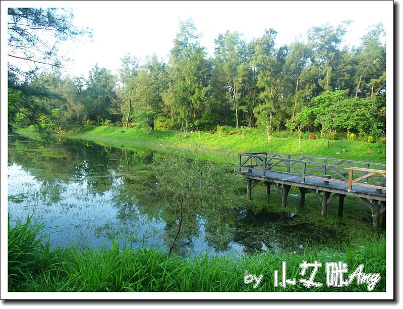 台東黑森林琵琶湖P1010261