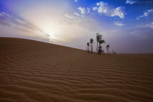Desert by TARIQ-M