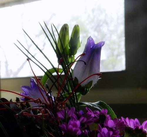 7flower