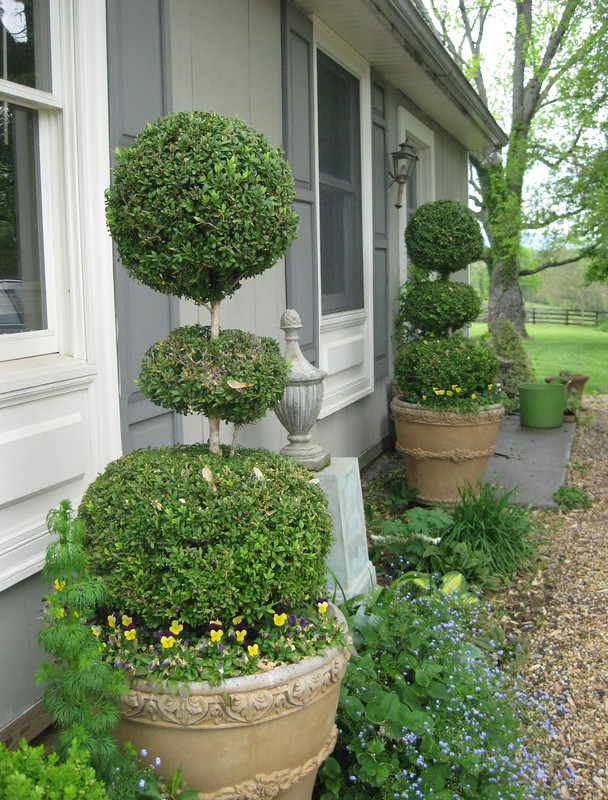 studio: triple ball boxwood topiaries