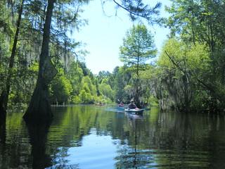 Sparkleberry Swamp Jun 2, 2012 10-13 AM
