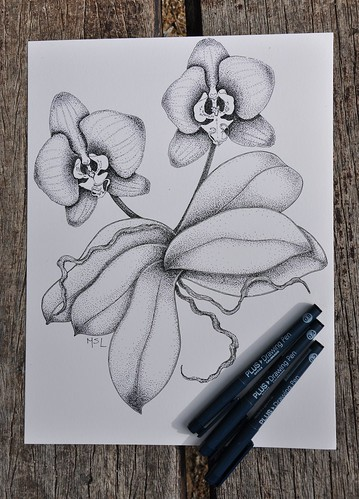 Orchids. Phalaenopsis.