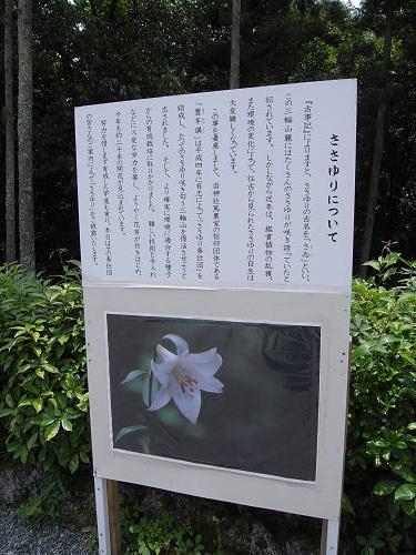 ささゆり園@大神神社-04