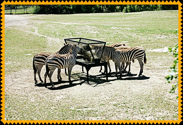 Zoo0712 007
