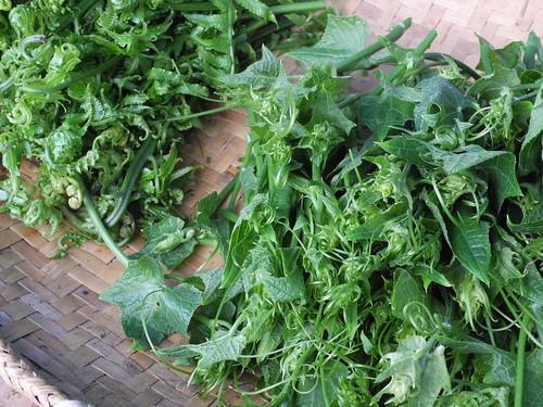 市集販售部落原生野菜,圖為過貓以及龍鬚菜。