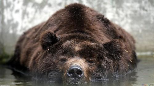 bearhottub