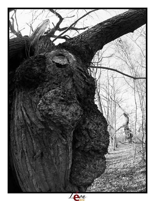 Le peuple de la forêt - Page 4 6908162724_d00e64cbc3_z