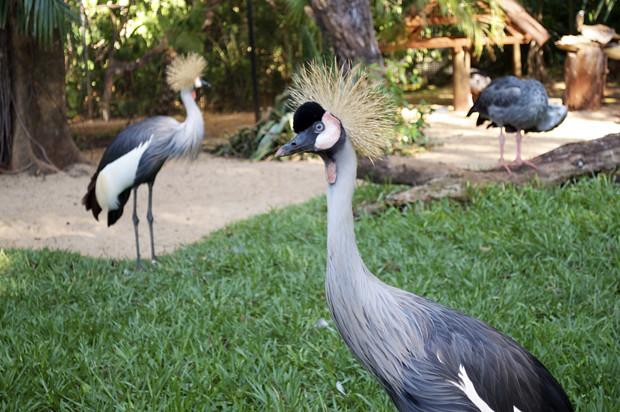 Parque das Aves 5