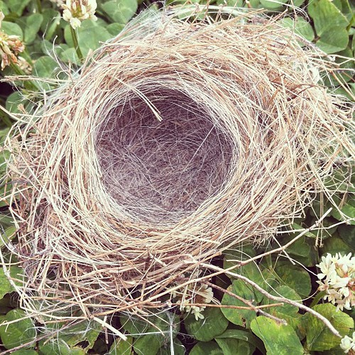 I found this empty nest on my run today. I hope all the baby birds made it out safely.