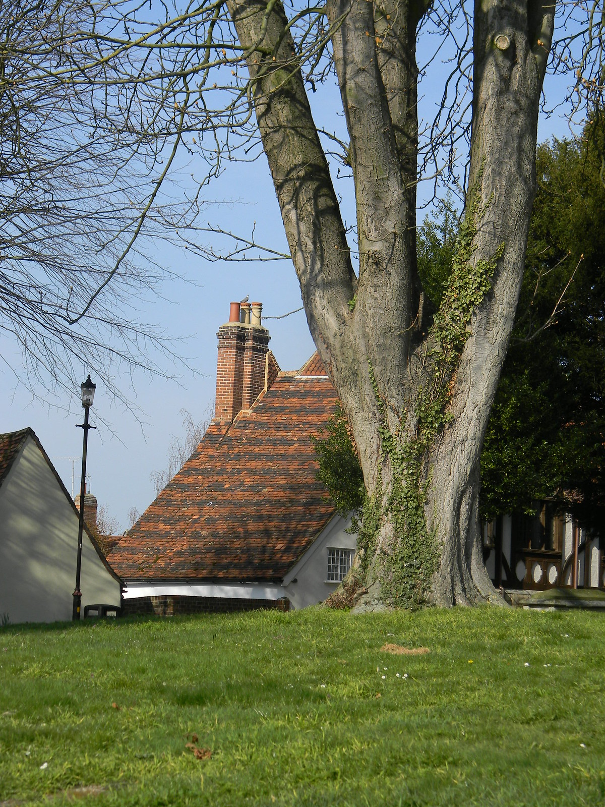 Old roof and tree Great Chesterford to Newport