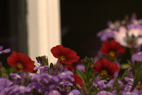 Window Box Flowers, SOOC