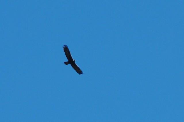 julie eagle